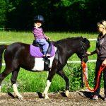 Jahanje konjev – kdaj in kako začeti z jahanjem?