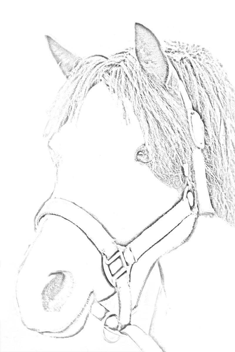 Pobarvanka konji