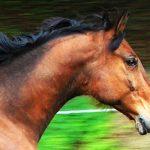 Konj mi je položil glavo v naročje in se mi zahvalil