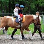 7 pogostih zmot o konjih in jahanju v konjeniških klubih in tudi drugje