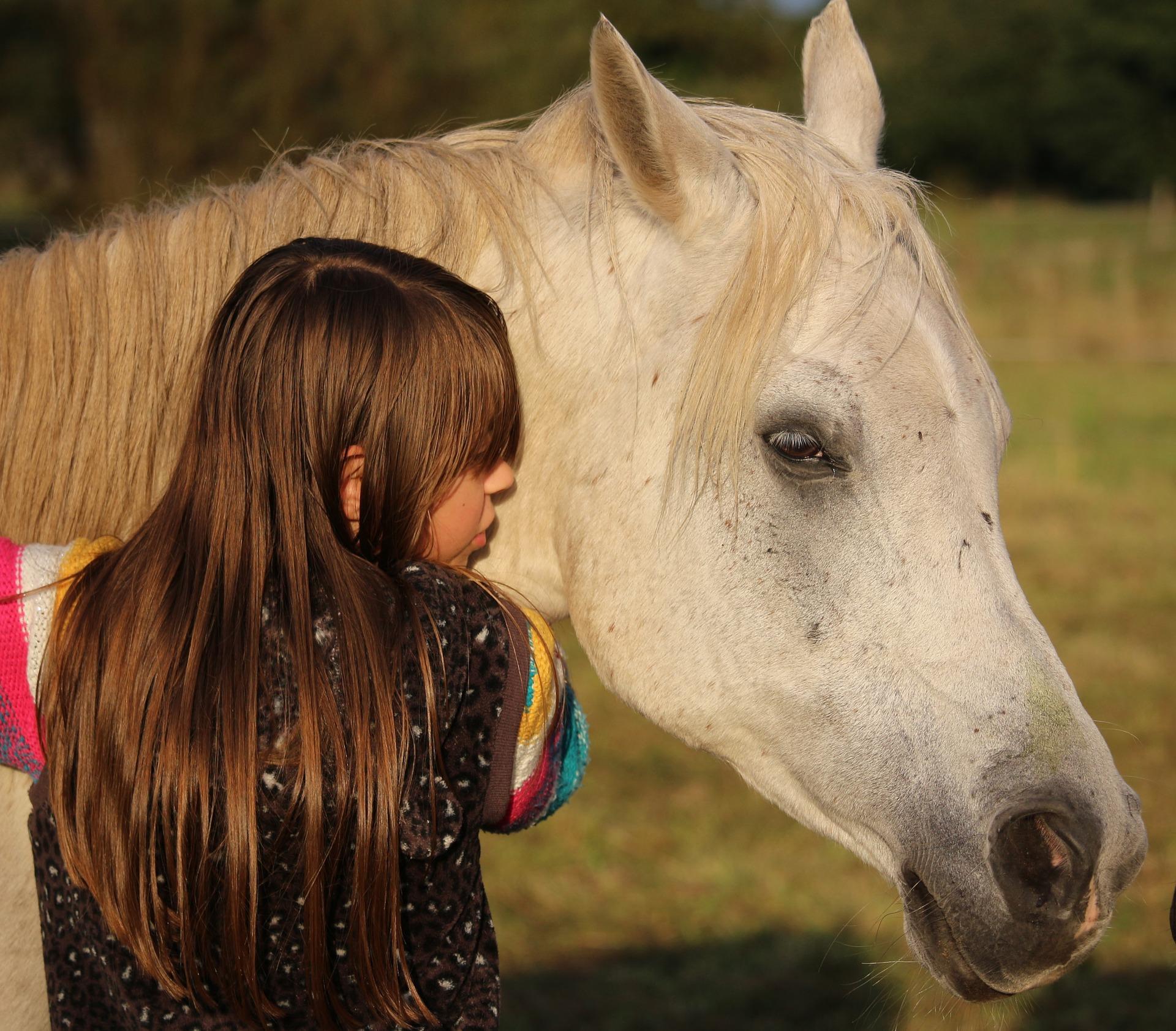 spoznavanje konj