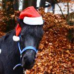 Božično jahanje z ustvarjalno delavnico