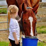 Konji so zakon