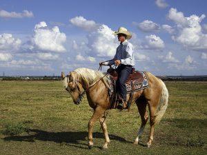 dogodki s konji