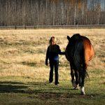 Delavnica: Z roko v roki s konjem
