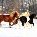Zimske počitnice v Konjeniškem klubu Grič